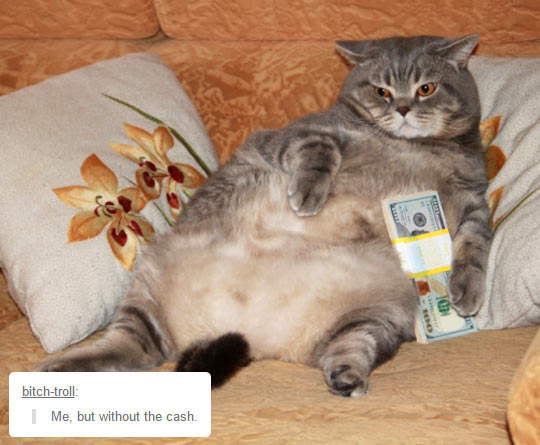funny-fat-cat-money