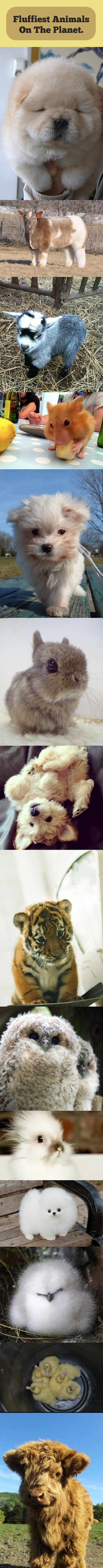 funny-fluffy-pets-hairy-compilation