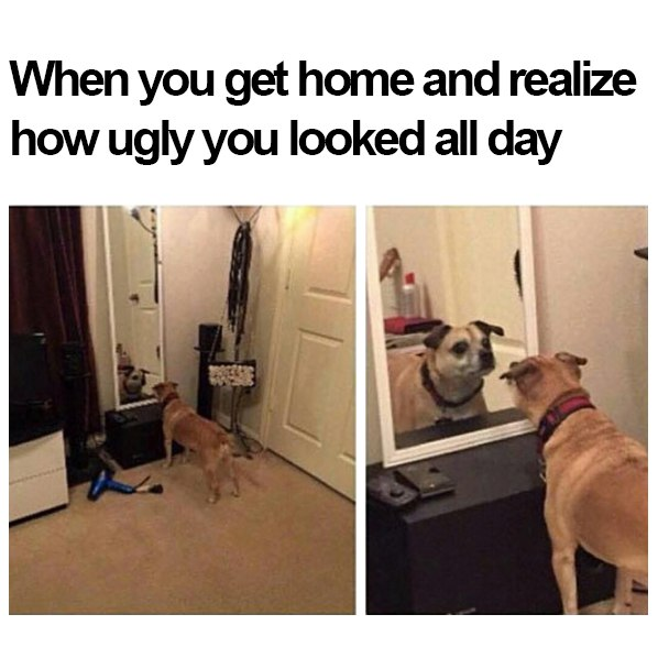 home-ugly-dog-mirror-all-day