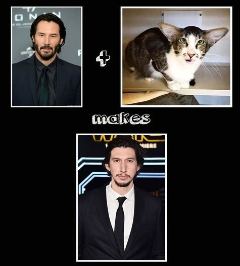 keanu-cat-Adam Driver