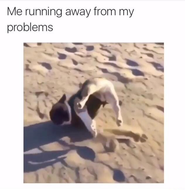 running-away-problems-pug