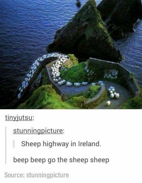 sheep-highway-beep