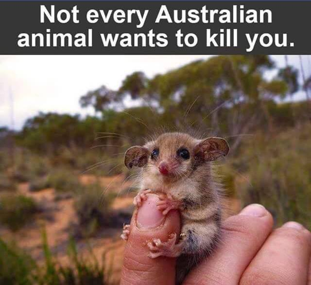 australian-animals-cute-kill