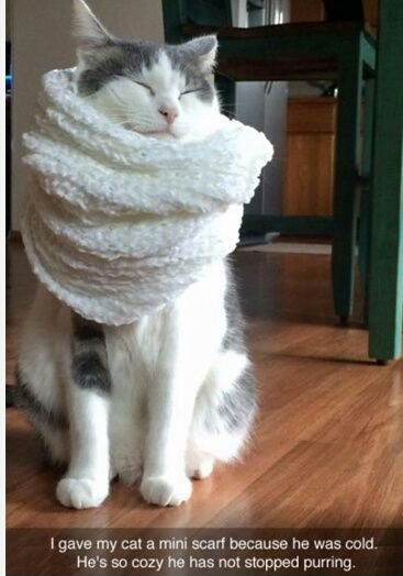 cat-scarf-cosy-cute