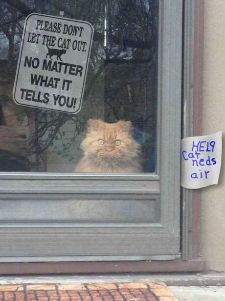 cat-sign-mad-eyes