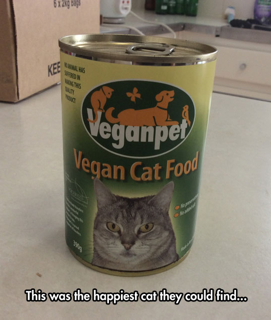 cool-cat-food-vegan-can
