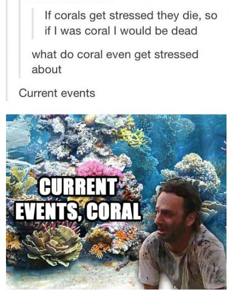coral-stressed-meme-rick-grimes