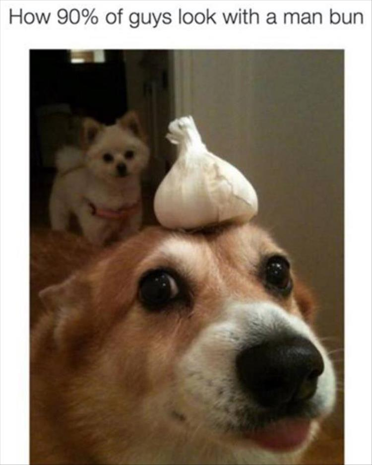 man-bun-dog-garlic