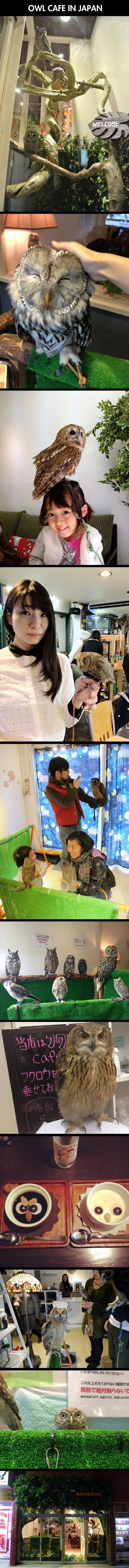 owl-cafe-japan-compilation