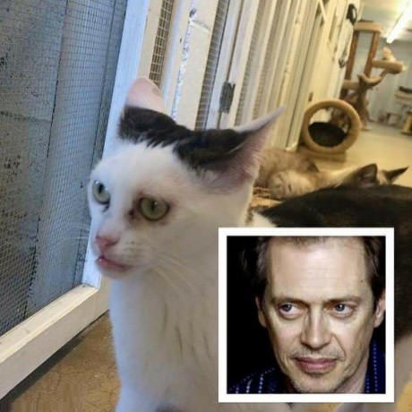 Buscemi Eyes Cat