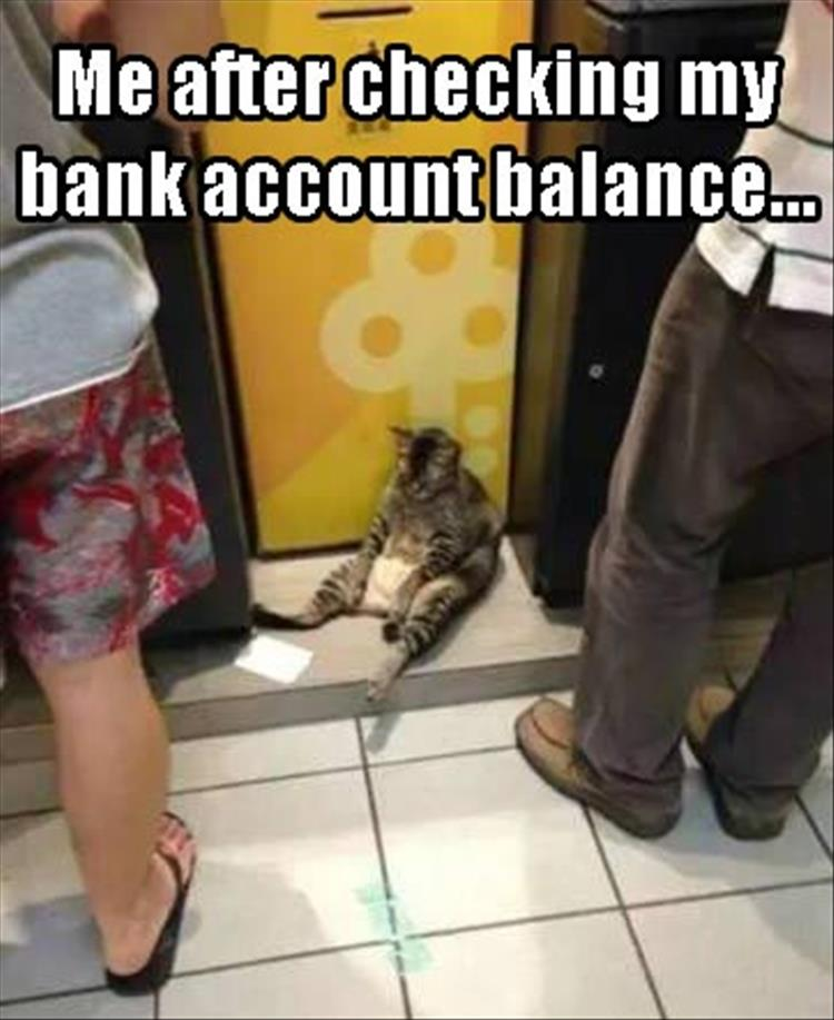 bank-account-balance-cat-sad