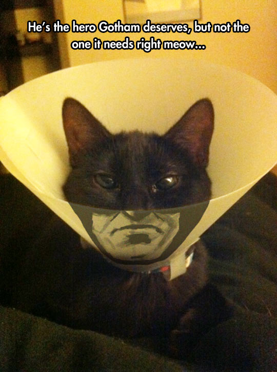 cool-Batman-cat-cone-shame