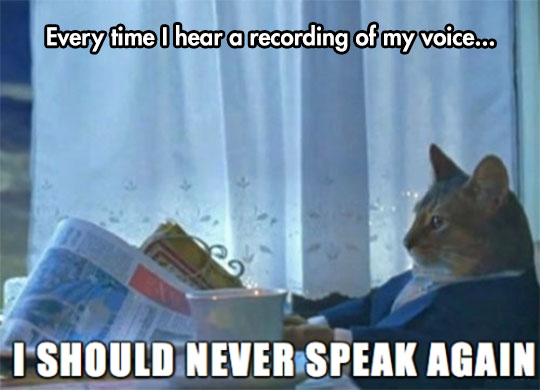 cool-cat-newspaper-recording-voice