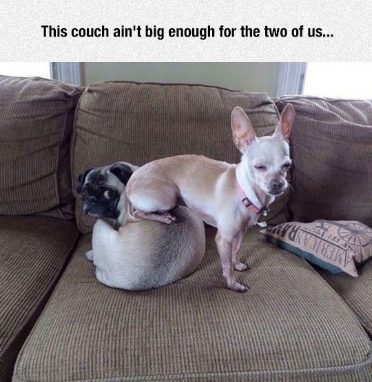 funny-dogs-sleeping-couch-cute