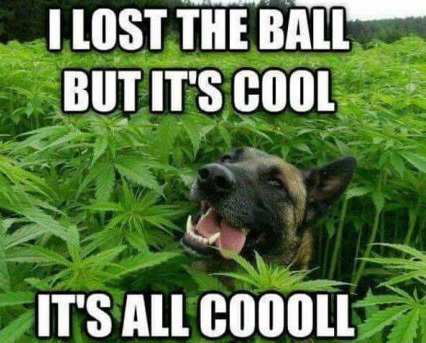 lost-ball-dog-weed