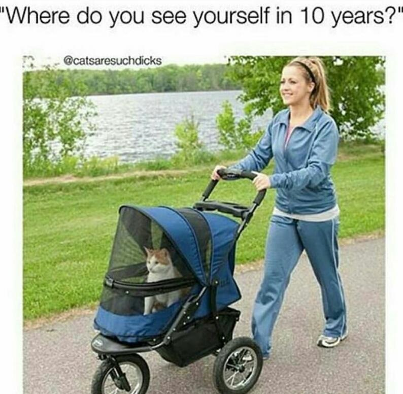 cat-future-lady-stroller