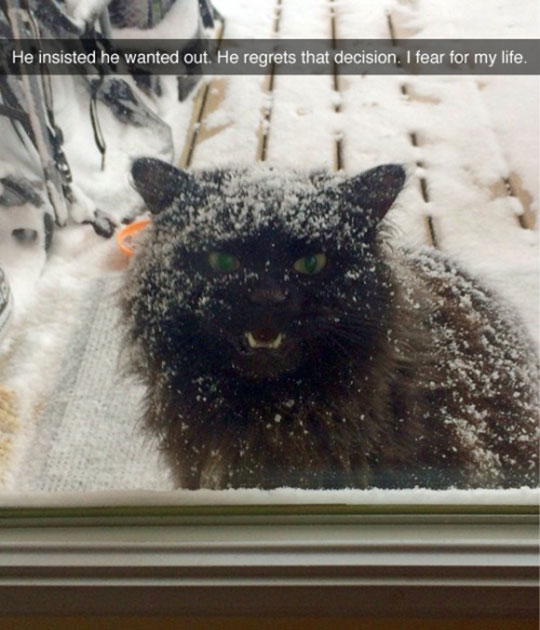 cat-snow-angey-creepy
