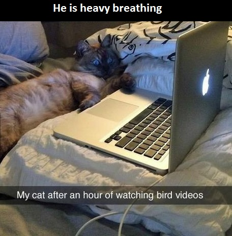 bird-videos-cat-laptop