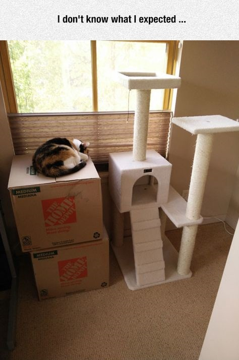 cat-toy-house-box