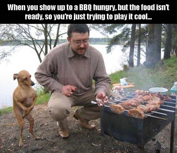 dog-bbq-food-meat