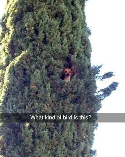 dog-bird-tree-kind