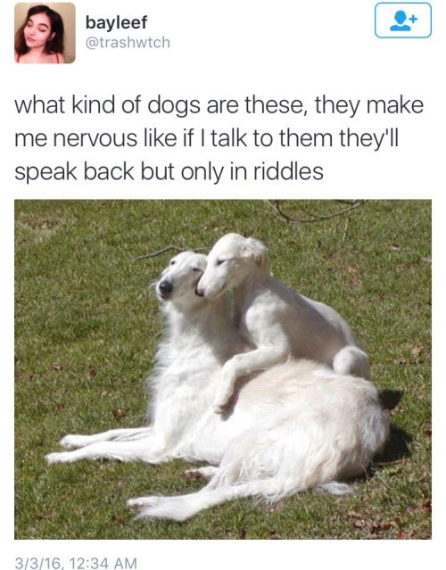 dogs-kind-riddle