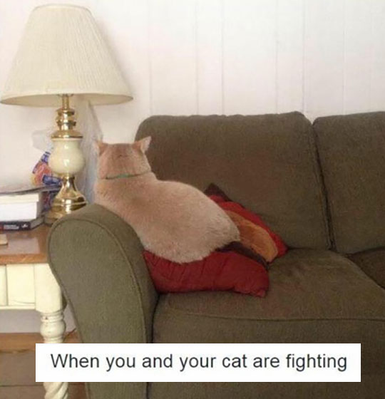 funny-cat-angry-looking-away