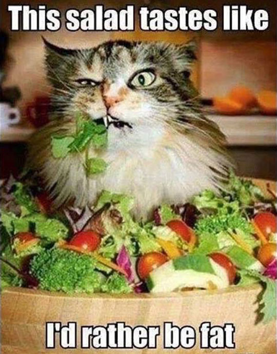 funny-cat-eating-salad-angry
