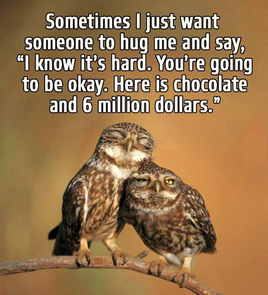 funny-owl-hug-money-chocolate