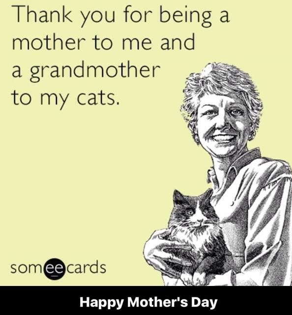 mothers-day-grandmother-cats