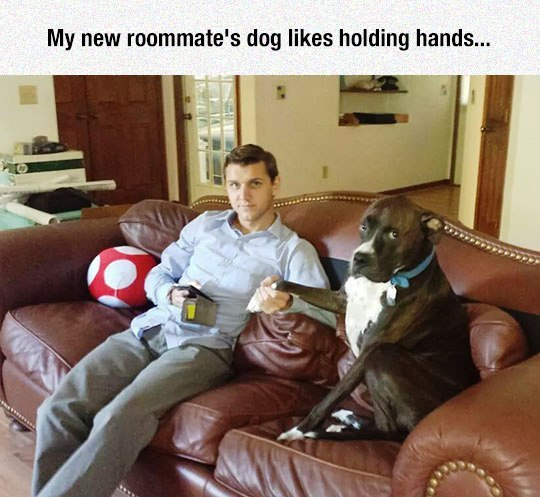new-roommate-hold-hands