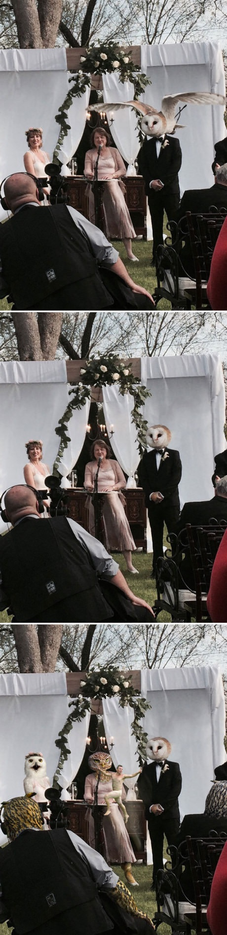 owl-wedding-photobomb