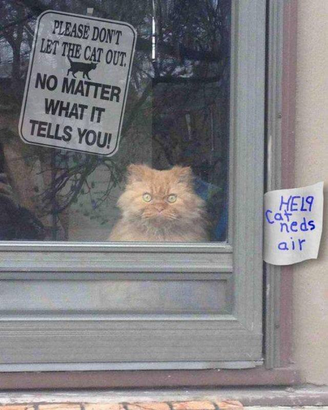 sign-cat-mad-eyes