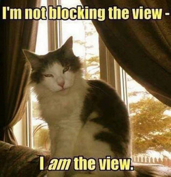 cat-block-view