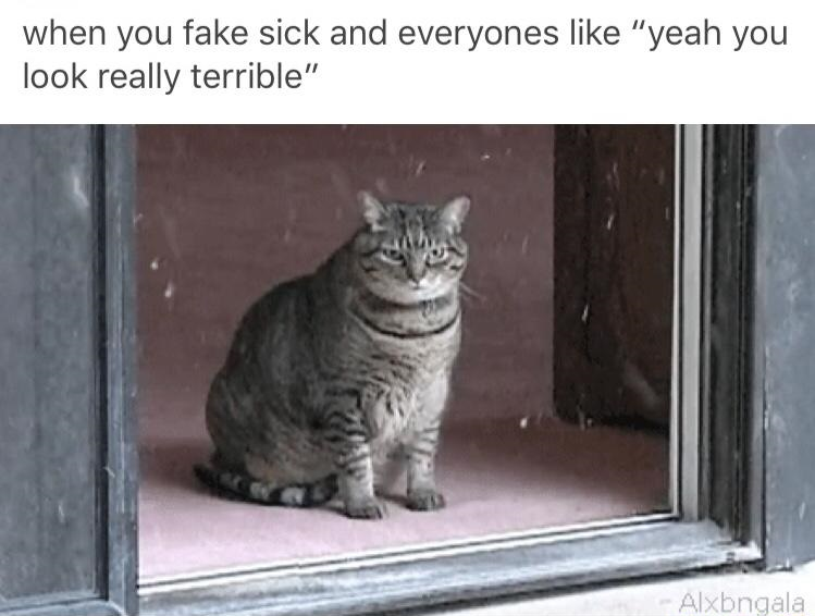 cat-fake-sick-terrible