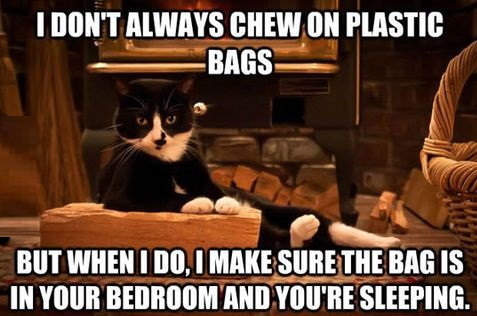 cat-plastic-bag-noise