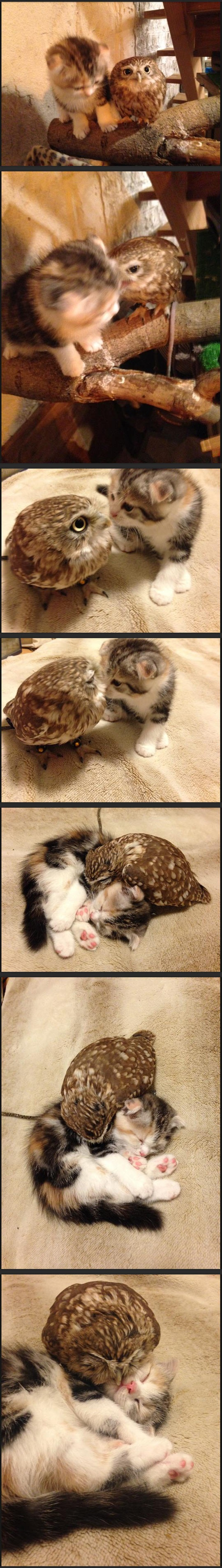 cool-cat-owl-best-friends