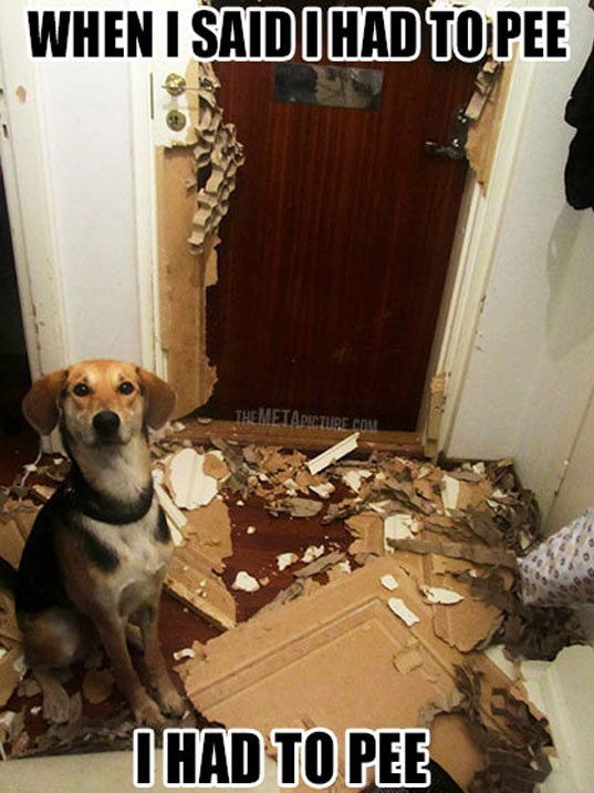 cool-dog-mess-broke-door