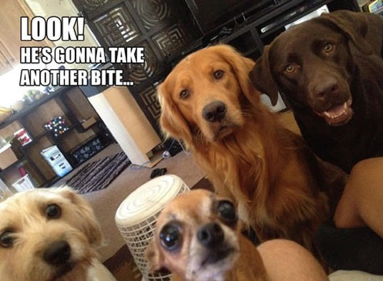 cool-dogs-watching-while-you-eat