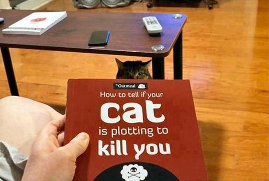 cool-kill-cat-book
