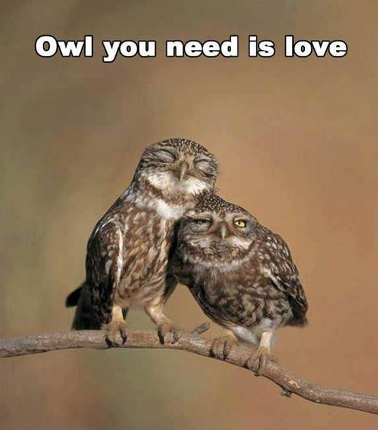 cool-owl-love-happy