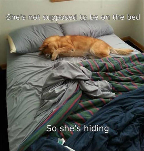 dog-rebbel-bed-hiding