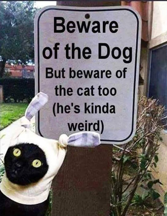 funny-beware-dog-cat-sign