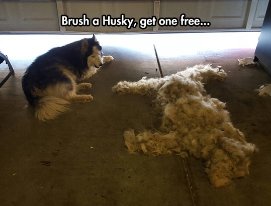 funny-husky-dog-fur-brush