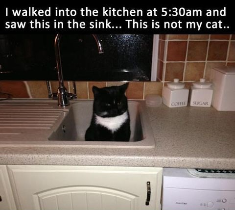 kitchen-cat-night