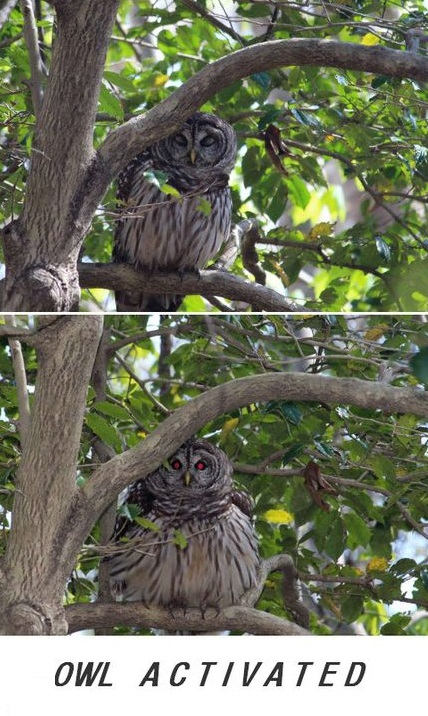 owl-activate-eyes-red