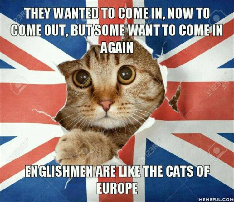 britain-cat-europe-eu
