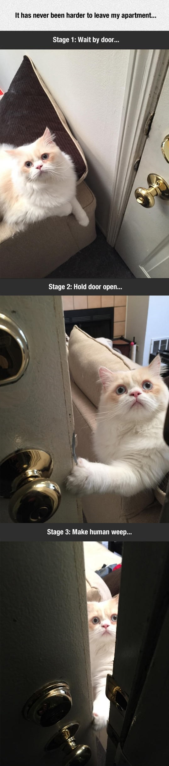 cat-cute-door-leaving