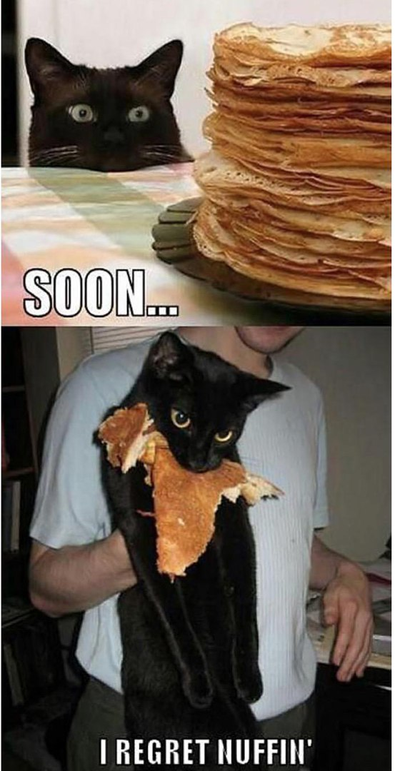 cat-pancakes-no-regrets