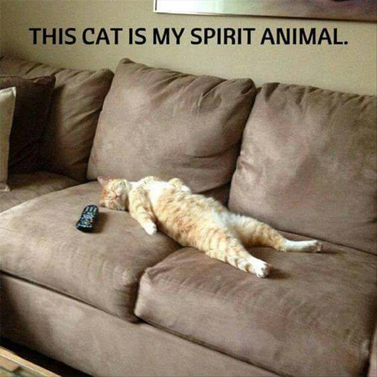 cat-sleeping-spirit-animal